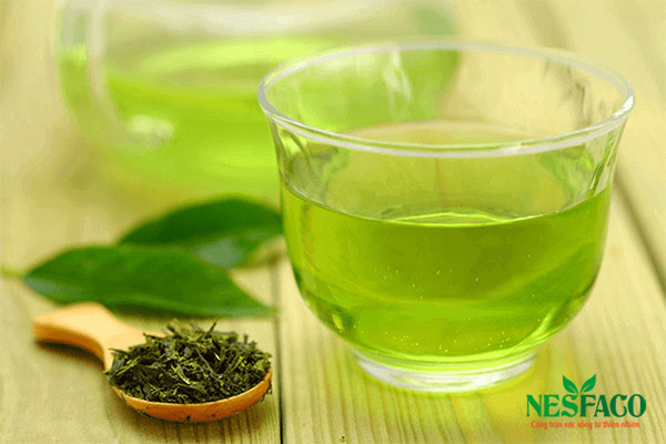 Lá trà trà xanh trị tiểu đường